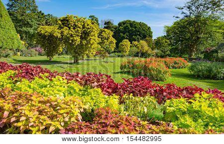 Nice landscape with flower's garden, SriLanka
