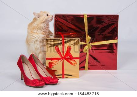 The Cat Sniffs The Gift Boxes That Are Next To The Red Lady's High-heeled Shoes