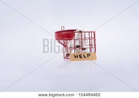 Polar Bear In Cage Asking For Help