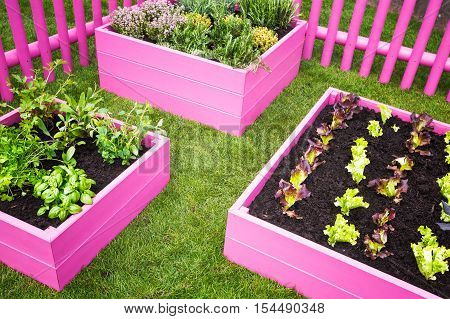 Urban herb garden. Pink raised beds with herbs and vegetables. Trendy garden design