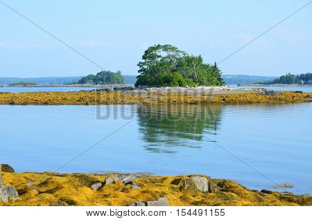 Casco Bay island with a rocky shore and seaweed.