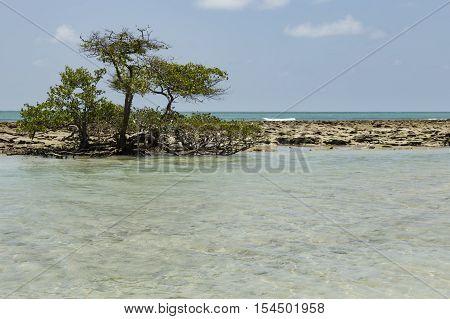 Carneiros Beach In Porto De Galinhas, Recife, Pernambuco - Brazil
