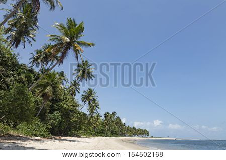 Palm Trees In Porto De Galinhas, Recife, Pernambuco - Brazil
