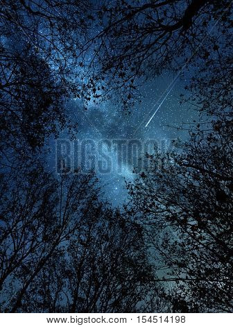 Beautiful starry night sky and meteor above the trees