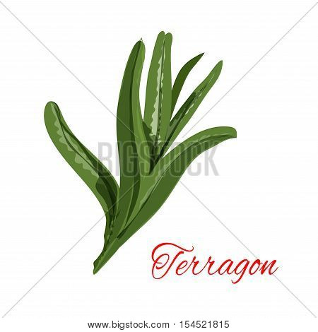 Tarragon. Vector isolated icon of spice plant tarragon. Aroma food ingredient, condiment emblem of estragon spicy condiment for packaging design, cuisine menu card decoration, grocery shop, food market tag