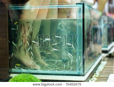 Exotic Foot Massage In Aquarium