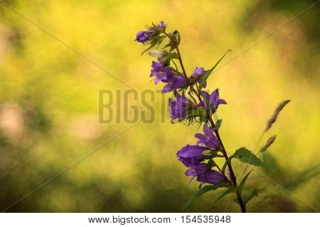 Close up of bluebell in the countryside