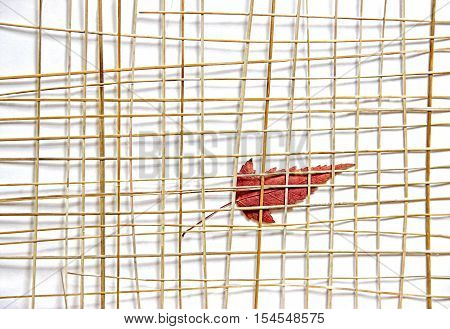 Bright Red And Yellow Multicolor Pressed Decorative Maple Leaves Under The Grate Of Straw Photo Mani