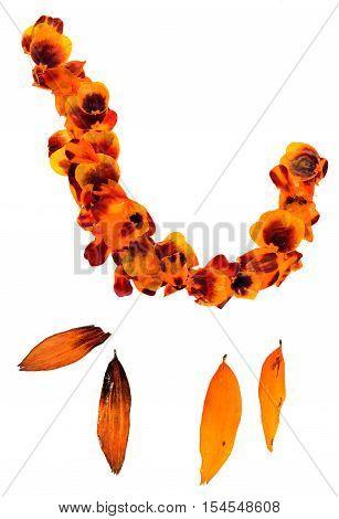 Transparent Dried Pressed Orange Mottled  Marigold Petals