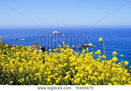 Bright yellow flowers along ocean coastline