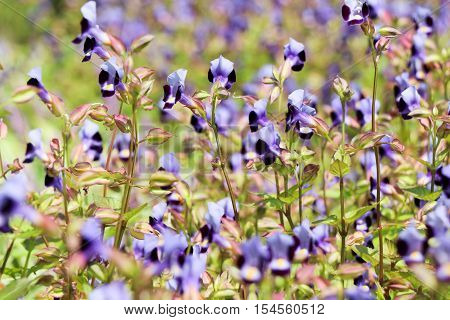 Flower bed as a background with many beautiful colorful flowers