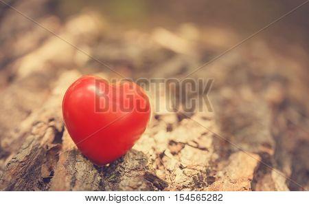 Love Symbol On The Tree Trunk