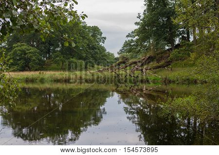 Reflections in a pond in the countryside of Ambleside in Cumbria UK