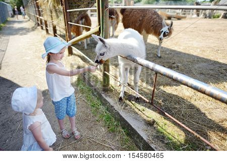 Two Little Sisters Feeding A Baby Llama