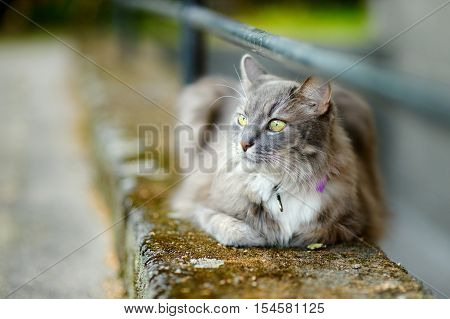 Beautiful Gray Cat By A Doorstep