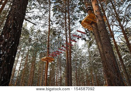 Rope park in the Pine Forest in Siberia