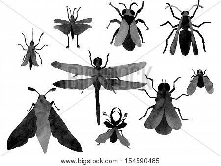 flying insects helpful and harmful to the shells mustache paws