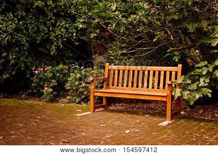 Wooden bench in beautiful summer park