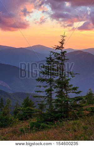 Summer Sunset Mountain View (carpathian, Ukraine).