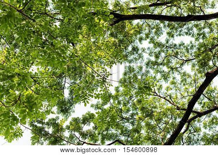 Trees Serenity Nature Environment Spring Rural Concept