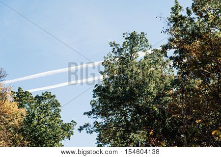 Contrails in the blue sky with trees in Autumn