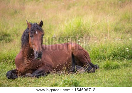 Beautiful horse is laying on the meadow