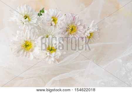 White chrysanthemum flowers with lace on wooden background