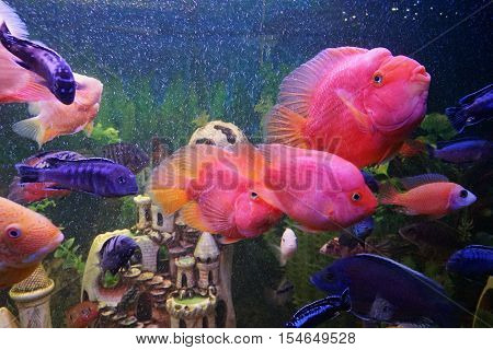 aquarium, fish, underwater, tank, nature, ocean, animal, water