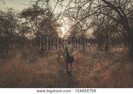 Tourist Walking In The Bush And Acacia Grove At Sunset, Bushmandland, Namibia. Adventure And Explora