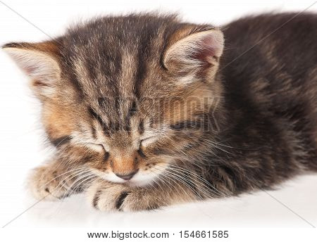 Portrait of cute asleep kitten over white background