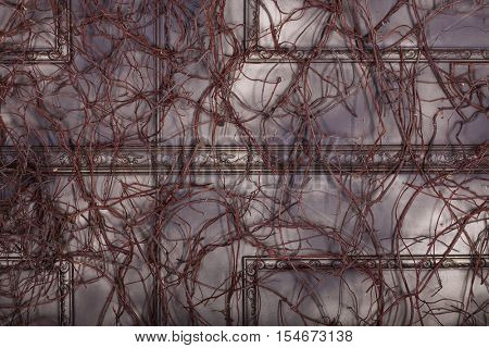 Brown wall with baguette and many branches - decoration in studio