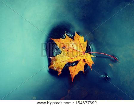 Autumn Colors. Fallen Maple Leaf On Slippery Basalt Stone In Smoky Water.