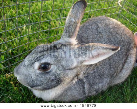 Mother Rabbit 3