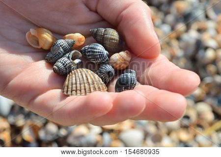 multi-colored cockleshells in a hand on the seashore