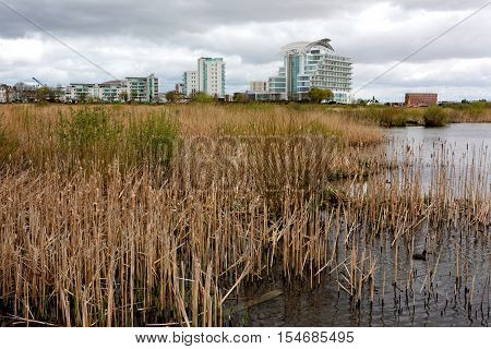 CARDIFF BAY, WALES, 25 APRIL 2016. Editorial photograph of Cardiff Bay Wetlands Reserve, a nature reserve created from an old salt marsh after the introduction of the Cardiff Bay Barrage in 2001