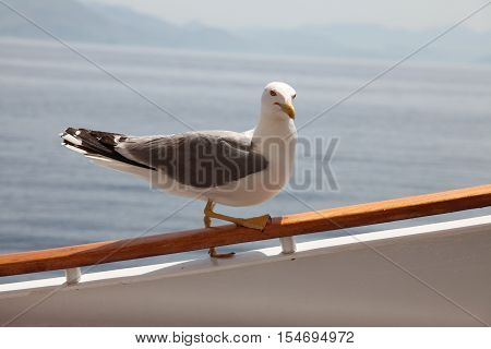 Gull sits on handrail. Seagull over the sea