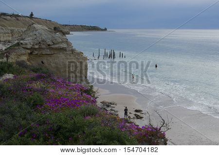 Port Willunga South Australia Australia - October 29 2016: People swimming and a woman walking her dog on the beach at the jetty ruins around sunset from the flower filled cliff tops.