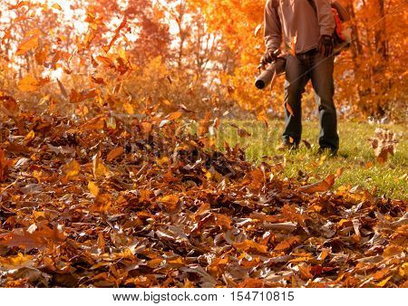 Leaf blower shown on side yard blowing fallen leaves into a pile as a huge oak with golden leaves stands behind