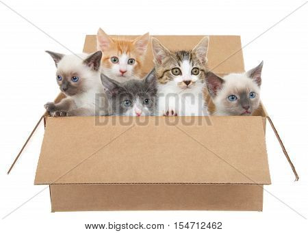 Five assorted kittens in a brown box looking up to viewers right except one looking left isolated on a white background. Kitten season kittens for sale and or free to good home