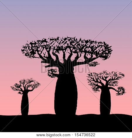 vector illustration three baobabs at sunset or sunrise