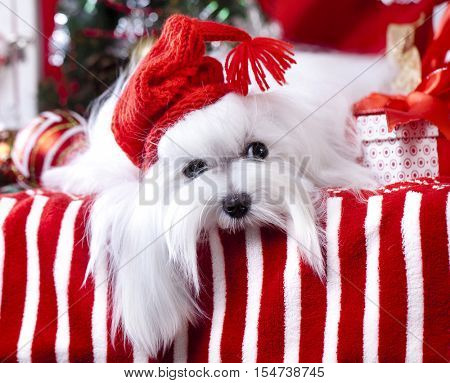 Christmas dog gnome in a red cap