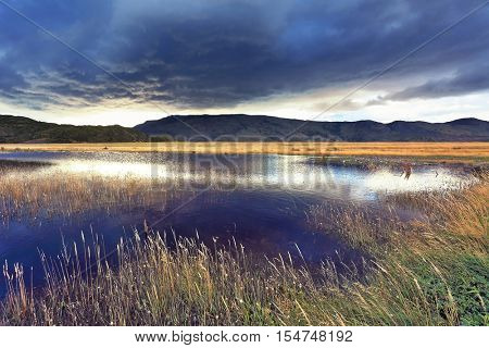 The valley is surrounded by mountains in the national park Torres del Paine, Chile. Shallow lake, overgrown with reeds, reflects the blue sky. The sky is partially covered with low thunderclouds