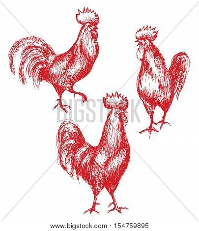 Hand drawn animalistic illustration. Red roosters sketch. Walking cocks set isolated on white.