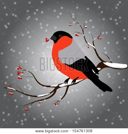 bullfinch sitting on a branch with a twig of Rowan in its beak, snowfall. Winter or christmas vector illustration.