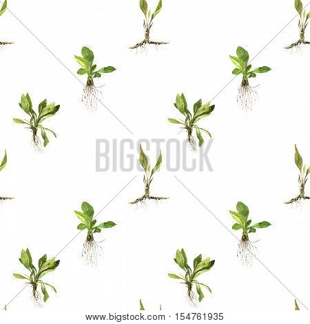 Seamless pattern with watercolor drawing herbs and grass with leaves and roots, painted wild plants, botanical illustration in vintage style, color drawing floral background, hand drawn ornament