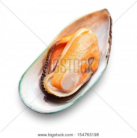 Green mussel on white background