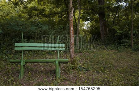 green wooden bench on the shore. resting place. autumnal weather. tree trunk. forest green.