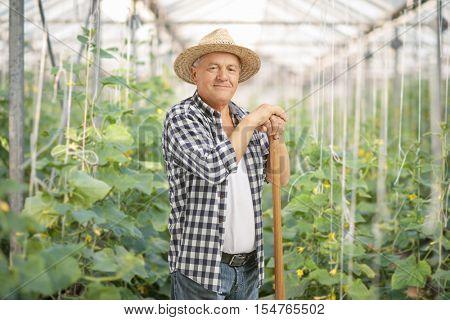 Mature farmer posing in a greenhouse