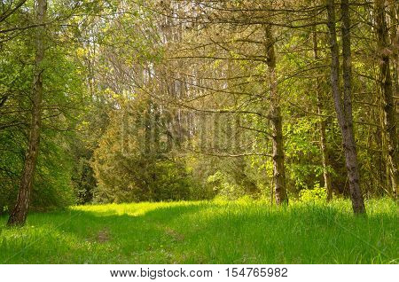 arboretum in Tiszalok, Hungary. forest road. hungarian countryside. summer season landscape.