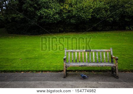 A bench in the beautiful and peaceful Regents Park, London.